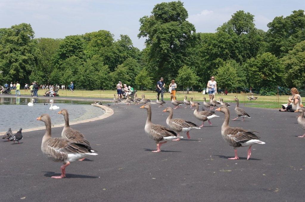 Round Pond, Kensington Gardens,& the Albert Memorial, Hyde Park