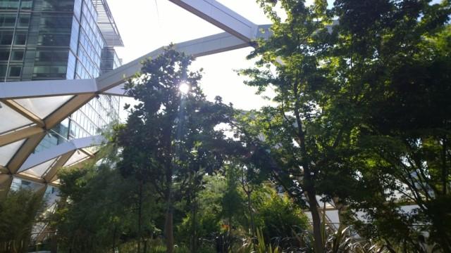 Trees Canary Wharf Crossrail