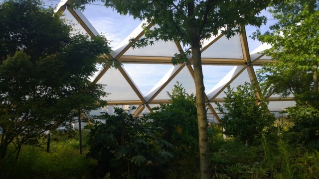 Trees Canary Wharf garden