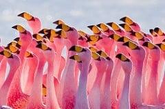 Flamingos Partying