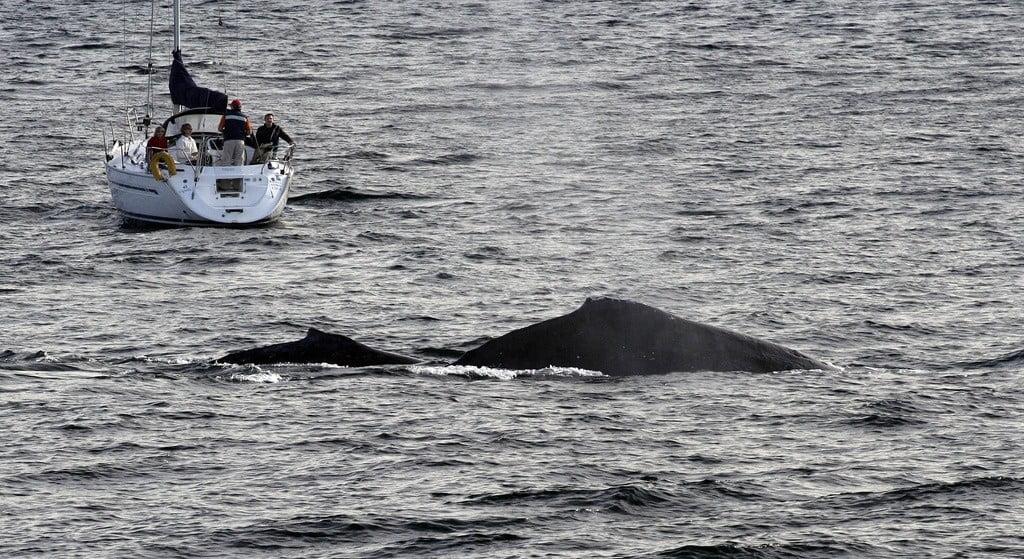 whales sydney photo