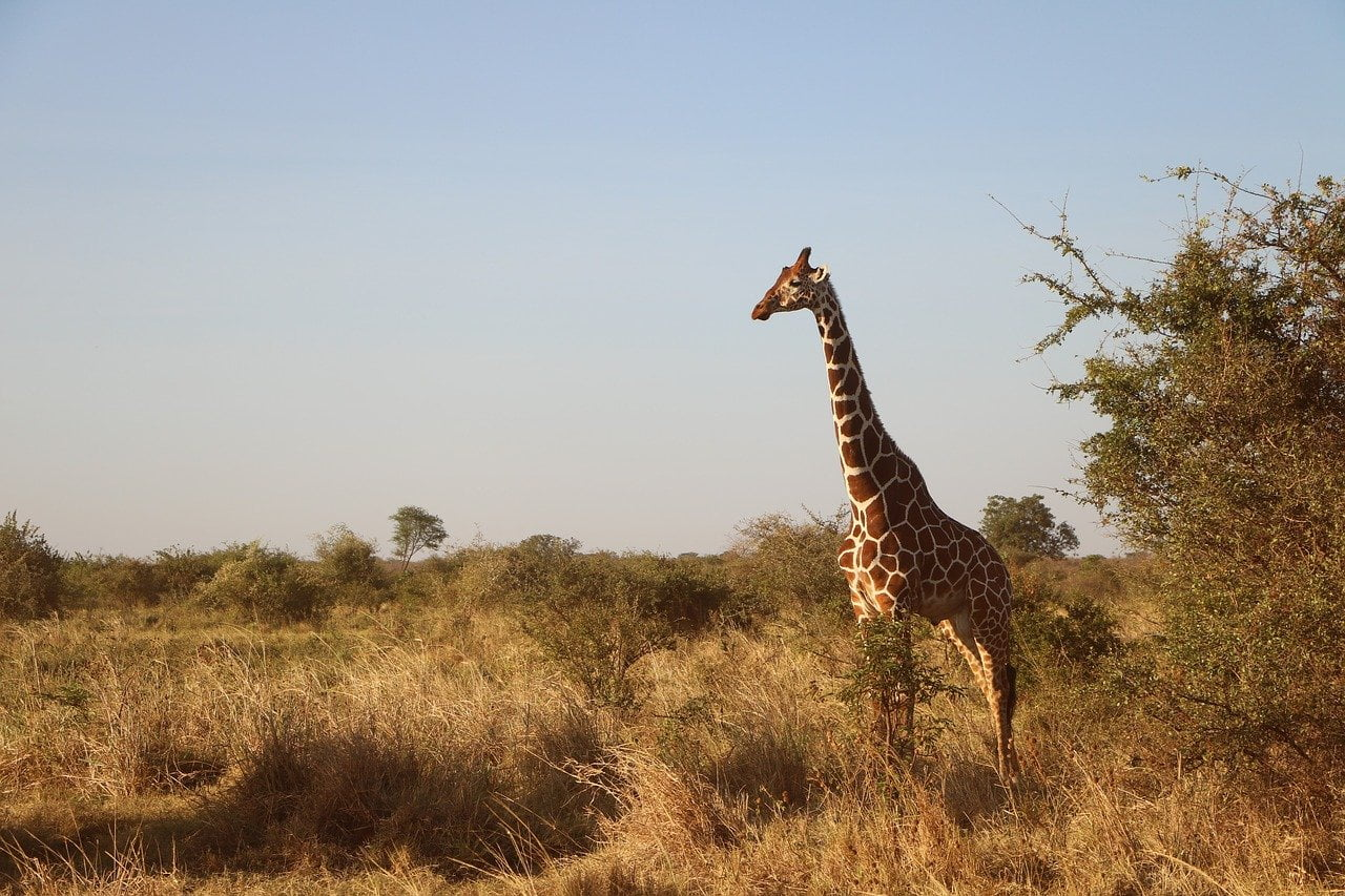 wildlife safari africa photo