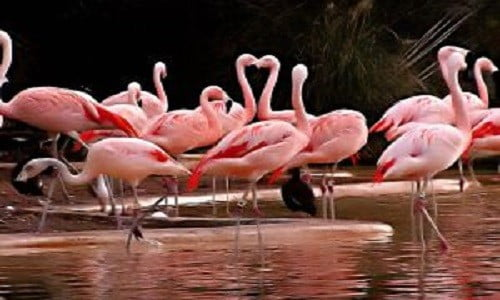 Cyprus_Natural Beauties_Image_Salt Lake_Pink Flamingos