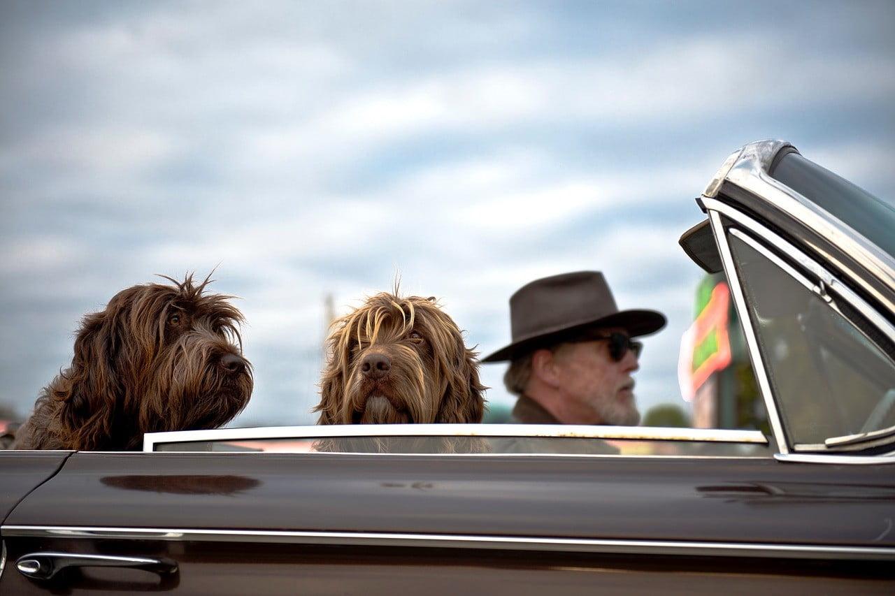 dog travel uk photo