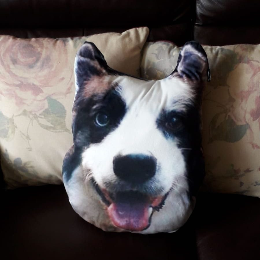 Dogsy Review - I Turned My Dog's Face Into a Personalised Pillow 2