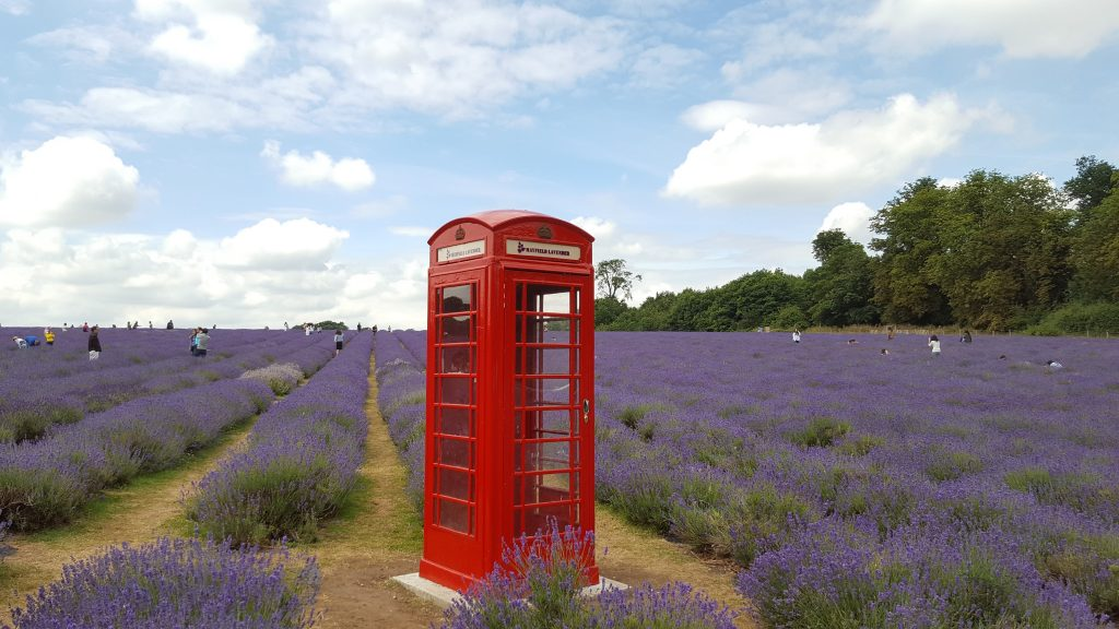 Red telephone box at Mayfield Lavender Farm