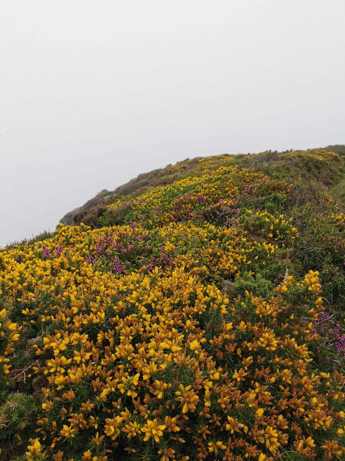 The Strangles Beach & Trail: A Hidden & Quiet Beach in Cornwall 35