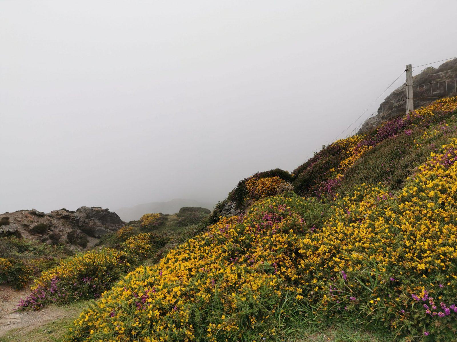 The Strangles Beach & Trail: A Hidden & Quiet Beach in Cornwall 47