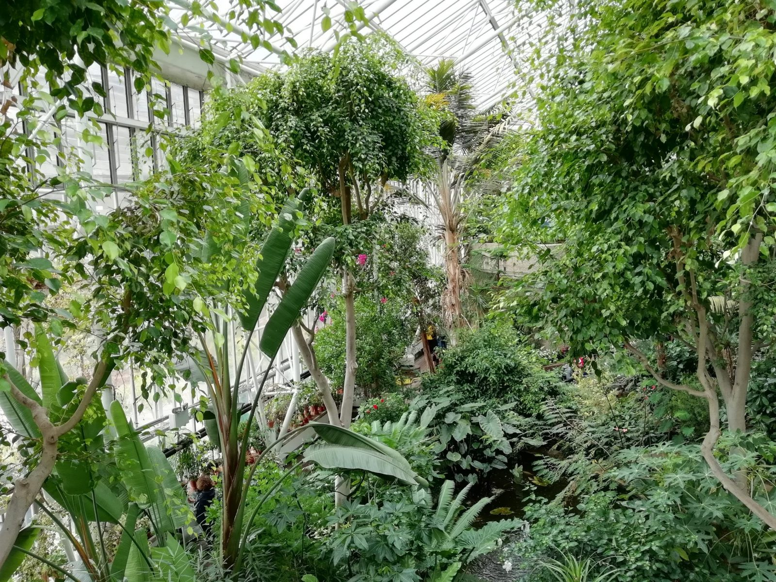 Visiting Barbican Conservatory: Photo Gallery 7