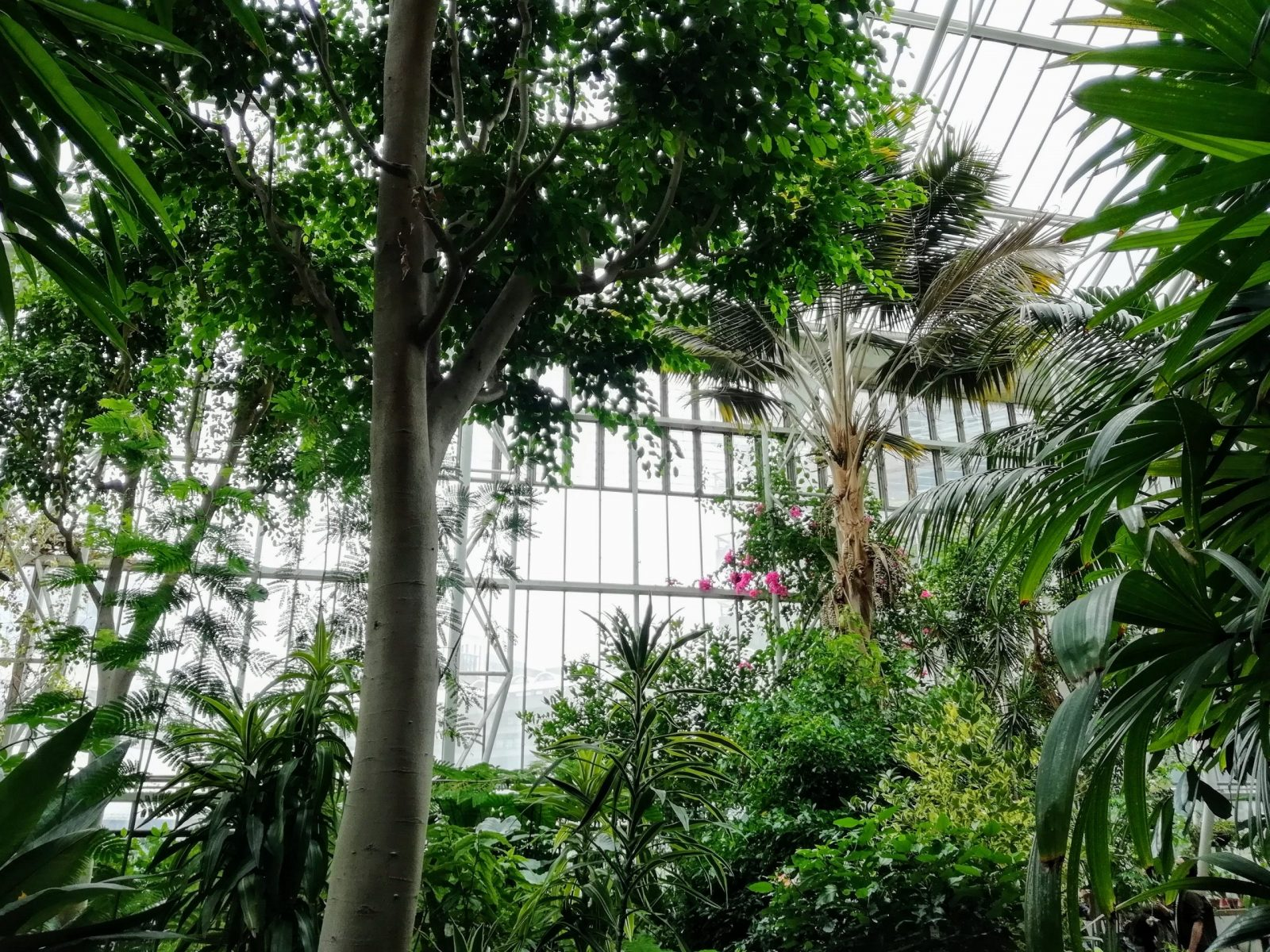 Visiting Barbican Conservatory: Photo Gallery 6