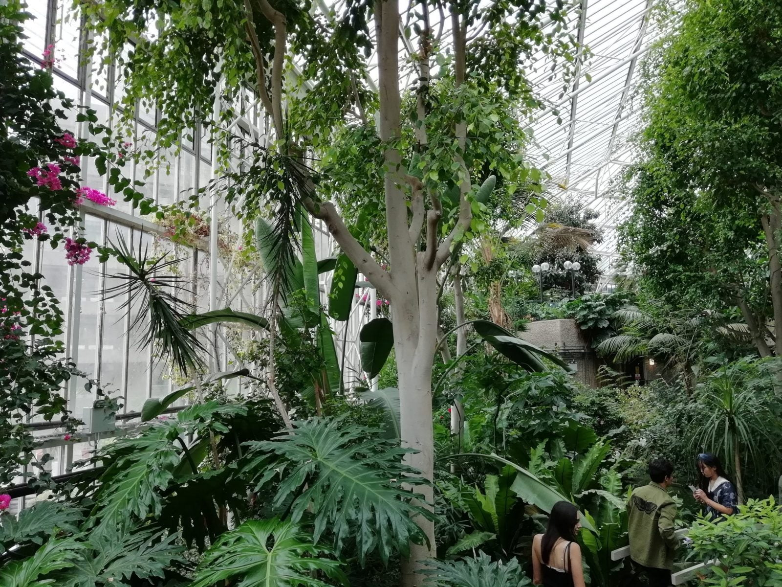 Visiting Barbican Conservatory: Photo Gallery 5