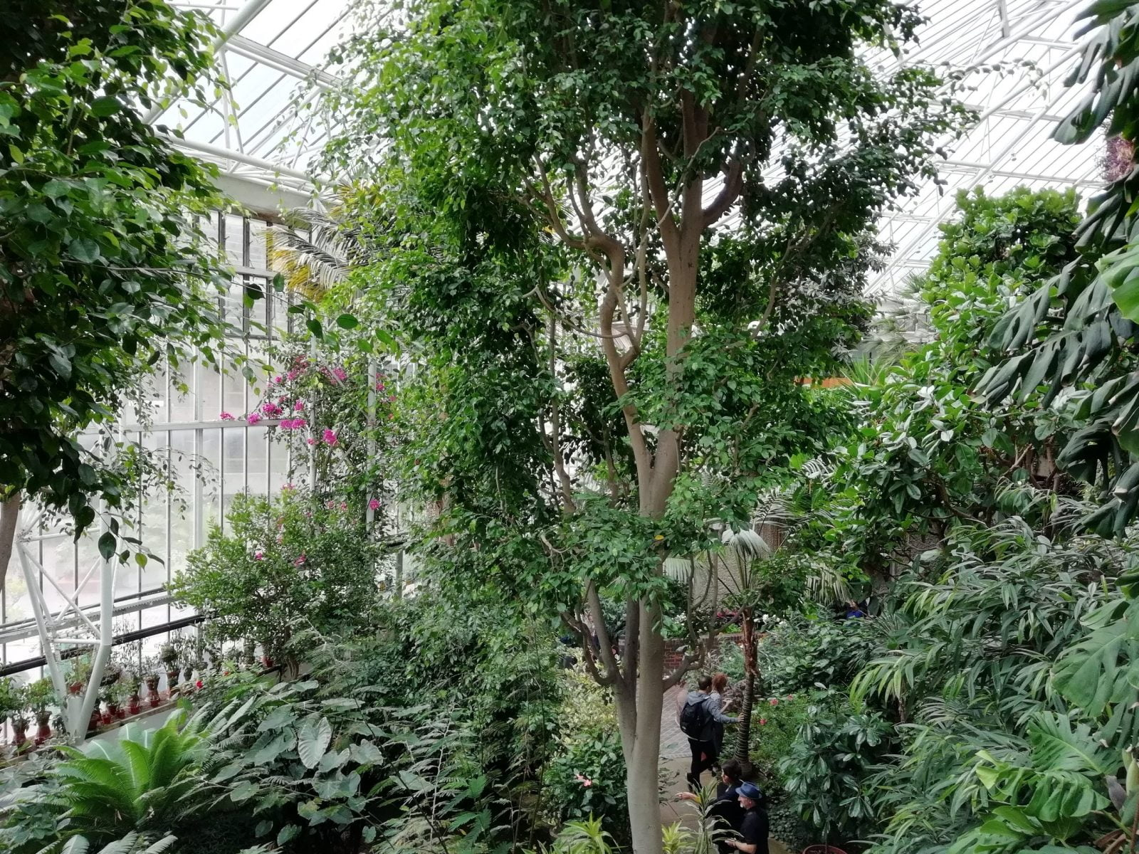 Visiting Barbican Conservatory: Photo Gallery 3