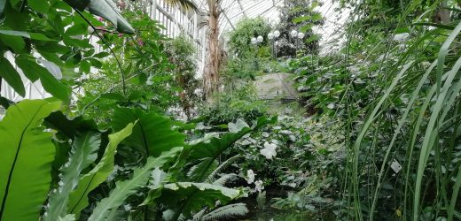 Visiting Barbican Conservatory: Photo Gallery
