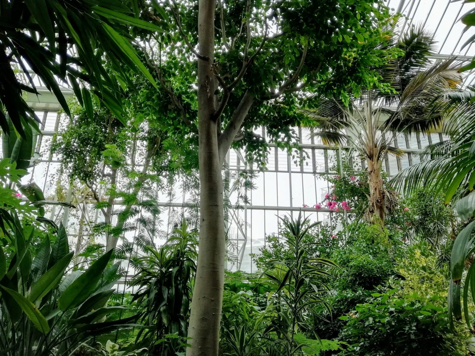 Visiting Barbican Conservatory: Photo Gallery 2